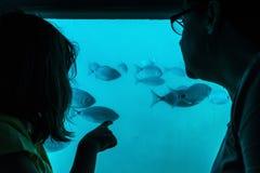 Moder och dotter som ser fisken till och med ett exponeringsglas i ett fartyg Arkivfoton