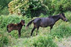 Moder- och dotterhäst i ett grönt fält Arkivbilder