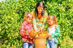 Moder och hennes döttrar som väljer clementines Fotografering för Bildbyråer