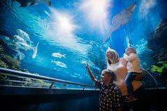 Moder och hennes hållande ögonen på havsliv för barn arkivbilder