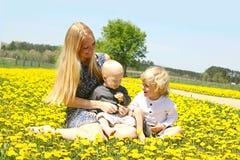 Moder och hennes söner i maskrosfält Royaltyfri Fotografi