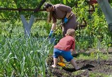 Moder och son som arbetar i grönsakträdgården Arkivfoto