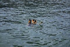 Moder och son som b?r en flytv?st, dykapparatdykning i havet arkivbild