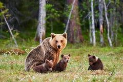 Moderbrunbjörn och hennes gröngölingar Royaltyfri Fotografi