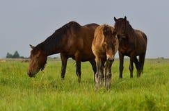 Moderhästen och hon behandla som ett barn hingstfölet i sommar Arkivfoton