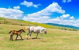 Moderhästen och hon behandla som ett barn på en härlig grön kulle Arkivfoton