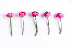 Moderiktig design med blommamodellen på vit åtlöje för bästa sikt för bakgrund upp royaltyfria foton
