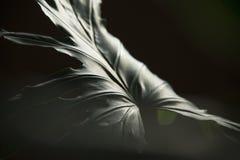 Moderiktig philodendron med disigt ljus royaltyfri foto