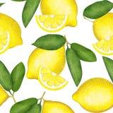 Moderiktig sömlös citronmodell på vit För textiler och tyg vektor illustrationer