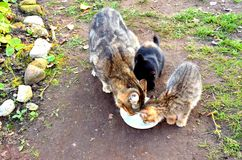 Moderkatten med hennes kattungar är mina hjältar för fotoperioden royaltyfri fotografi