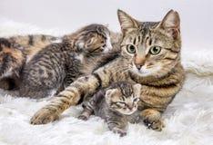 Moderkatten och gulligt behandla som ett barn kattungekatten arkivfoto