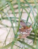 Moderkolibri som matar hennes newborns Arkivfoto