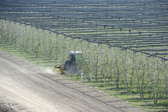 Modern äpplefruktträdgård för vår Fotografering för Bildbyråer