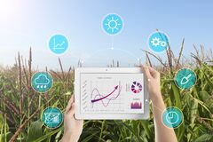 Modern agriculture. Woman with tablet in corn field and icons