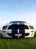 Modern American Musclecar. A modern american muscle race car parked in a field Royalty Free Stock Images