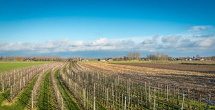 Modern apple orchard at the beginning of the winter season Royalty Free Stock Photography