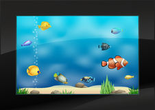 Modern aquarium in the interior Royalty Free Stock Images