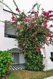 Modern arabic style house stock photos