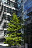 Modern architecture and tree in Paris Stock Image