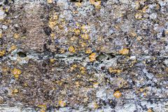 Modern art in nature. Natural lichen organisms on concrete wall. Natural lichen organisms on concrete wall. Natural organic abstract art background image in the royalty free stock photography
