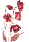 Modern art of red poppy flowers , watercolor painting Royalty Free Stock Photo