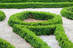 Modern asian garden with boxwoods. Royalty Free Stock Image