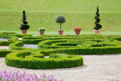 Modern asian garden with colorful flowers and boxwood. Royalty Free Stock Photo