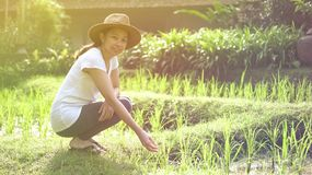 Modern Asian woman with hat at rice file, nature imerge lifestyl stock images