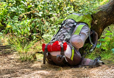 Modern backpack under tree stock photography