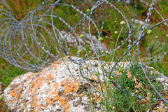 Modern barbed wire in coils on limestone in grass Stock Photo