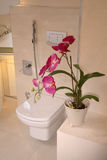 Modern Bathroom. A spacious, modern bathroom and toilet with a potted flower in the foreground royalty free stock photography