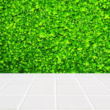 Modern beige mosaic with the wall made of four-leaf plant green Stock Images