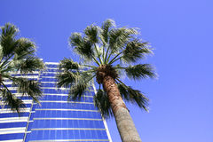 modern blå byggnad gömma i handflatan skyen Royaltyfria Bilder