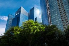 Modern blue skyscrapers and green trees. At downtown district. Business landscape background. Singapore city royalty free stock photo