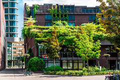 Modern building covered with green ivy Stock Image