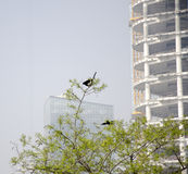 The Modern Building with Happy Birds. The forest and modern building park in the spring Royalty Free Stock Photos