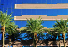 Modern building and palms Stock Image