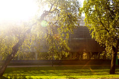 Modern building in a park. Green tree standing near business building against the sun Royalty Free Stock Photos