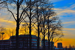 Modern building and silhouttes of trees Royalty Free Stock Images