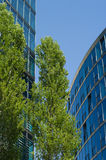 Modern buildings and green trees. Green trees against the backdrop of office buildings Stock Photo