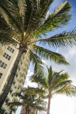 Modern buildings and palm tree Royalty Free Stock Image