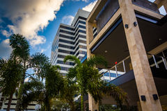 Modern buildings and palm trees in Saint Petersburg, Florida. Stock Photos