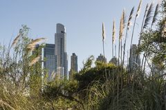 Modern buildings and pampas grass