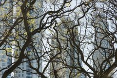 Modern buildings through twisted tree branches