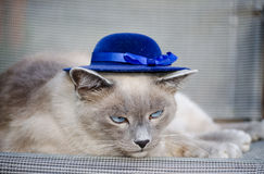 Modern cat stock photos