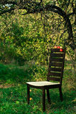 Modern chair in the orchard Stock Image