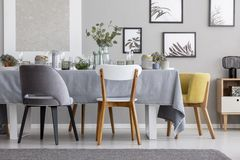 Modern chairs at table with tableware in grey dining room. Real photo. Modern chairs at table with tableware in grey dining room interior with posters and plants stock photography
