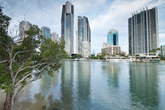 Modern city during the day. With tree beside (gold coast, queensland, australia stock photos