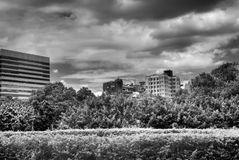 Modern city scenes with trees and clouds Royalty Free Stock Image