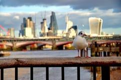 Modern cityscape av London, England Fotografering för Bildbyråer